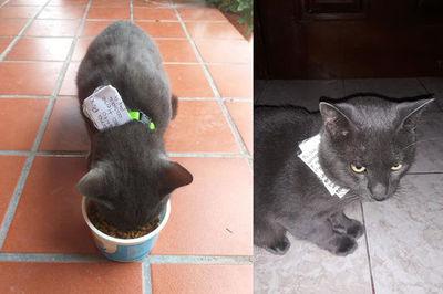 Chú mèo bị phát giác 'không chung thủy' thông qua những mẩu giấy