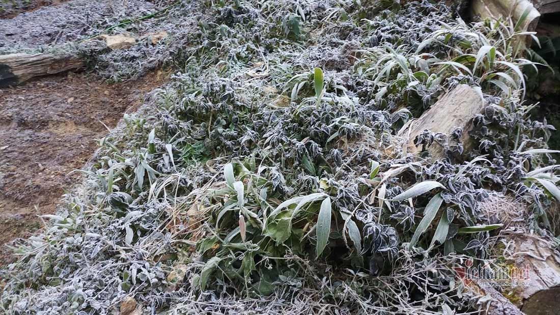 Cây cối phủ 1 màu trắng 'hóa đá' nơi vùng biên giới Nghệ An