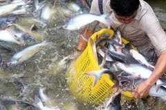 Vietnam to fall short of fisheries export target