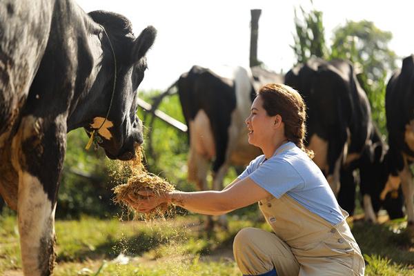 Cô Gái Hà Lan: 20 phút vàng và nguồn nguyên liệu sữa tươi an toàn