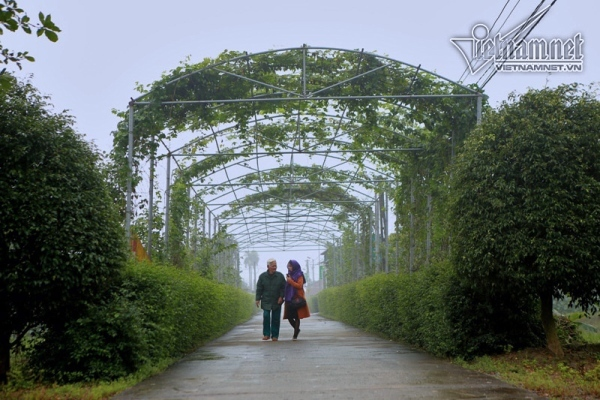 Hương Sơn, Hà Tĩnh đặt mục tiêu đạt huyện nông thôn mới năm 2020
