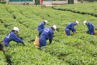 Nông thôn mới: Nhìn từ đội ngũ công nhân nông nghiệp