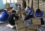 Sau 10 năm, Nam Định dạy nghề cho hơn 54.000 lao động nông thôn