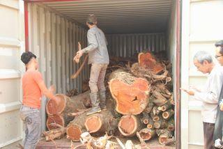 Vì sao lô gỗ sưa 'trăm tỷ' bị ế, bán đấu giá liên tục thất bại?