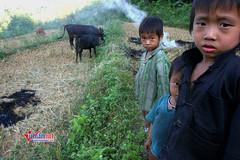 Chương trình 135: Giúp bà con vươn lên thoát nghèo ở khắp các địa phương