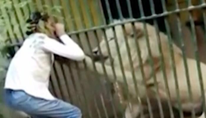 Kinh hoàng cảnh sư tử trắng tấn công người chăm sóc