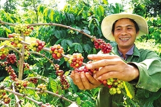 Agriculture sector works towards reaching $40 bln export target