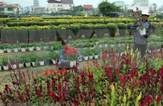 Vietnamese gardeners prepare for Lunar New Year