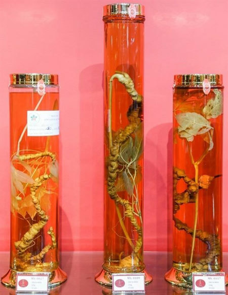 Ngoc Linh Ginseng Museum opens in HCM City