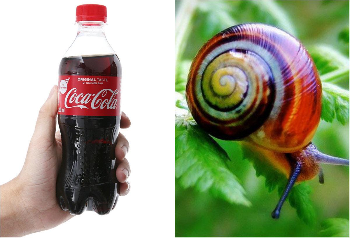 Bón rau bằng Coca không những hết sâu mà rau còn lớn nhanh như thổi