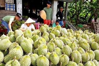 China tightens control over farm imports, Vietnamese farmers suffer