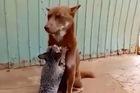 Video mèo mát xa cho chó ở Việt Nam gây bão mạng