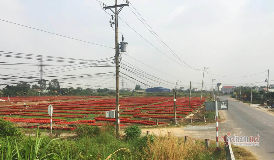Anh nông dân dựng lều, chăm ngàn chậu hoa Tết