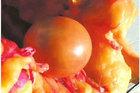 Vịt đực đẻ trứng, gà 4 chân, chuyện khó tin có thật