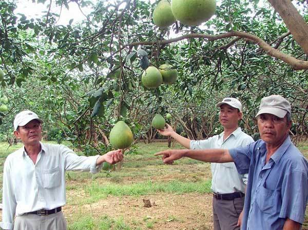 Creating brand names for VN farm produce