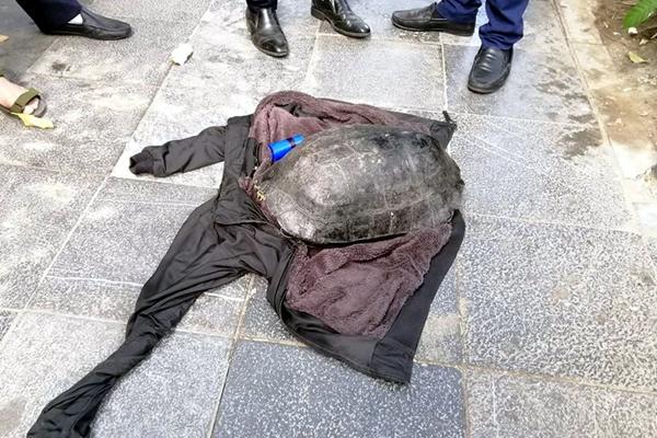 Tạm giữ người đàn ông nghi câu trộm rùa 10kg ở Hồ Gươm