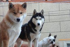 Chi hàng trăm triệu xây biệt thự có bể bơi, điều hòa cho chó cưng