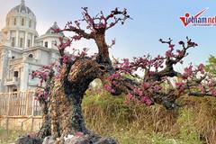 Hà Nội: Cây đào làm bằng đá quý nặng hơn 2 tấn được rao giá nửa tỉ đồng