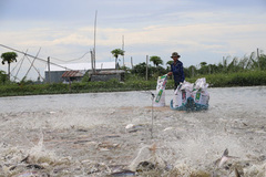 Vietnam's catfish industry loses clout, suffers lower prices in 2019
