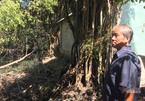 Bán mảnh đất 5000 m2, ông lão Tây Ninh thẫn thờ vì mất trắng món quà trời cho