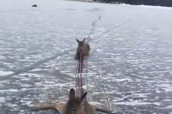 Xem người đàn ông liều mạng cứu gia đình hươu trên hồ băng
