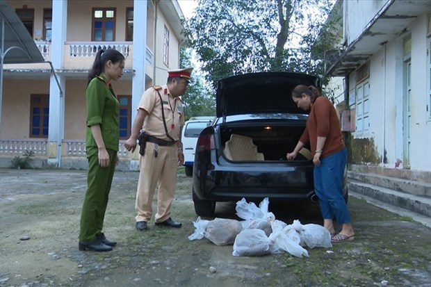Quang Tri police save nine trafficked pangolins