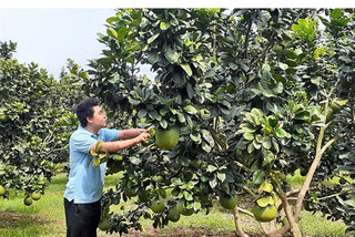 Vietnam takes steps to improve fruit yield, reduce post-harvest losses