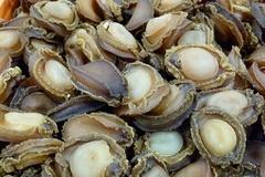 Tin đáng lo, biển Việt Nam vắng bóng hải sâm, bào ngư, tôm hùm