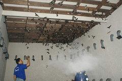 Thủ tục đăng ký kinh doanh khi nuôi chim yến