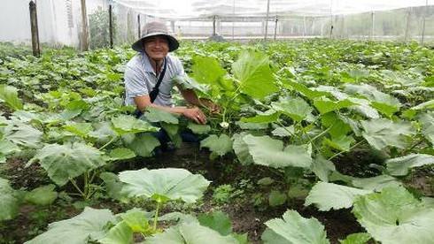 Bỏ việc ngân hàng lương cao về trồng rau '5 không' lãi 100 triệu/tháng