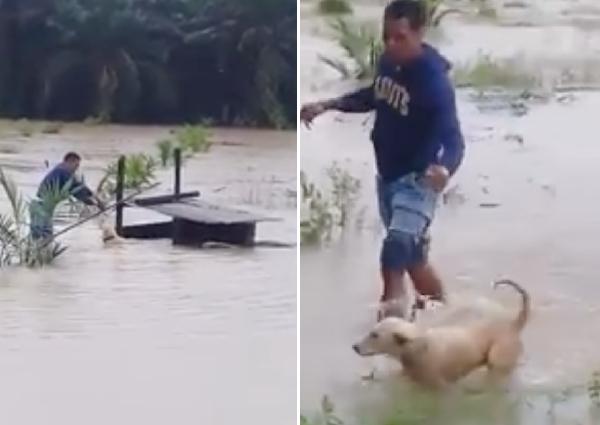 Người đàn ông giải cứu chú chó giữa dòng nước lũ