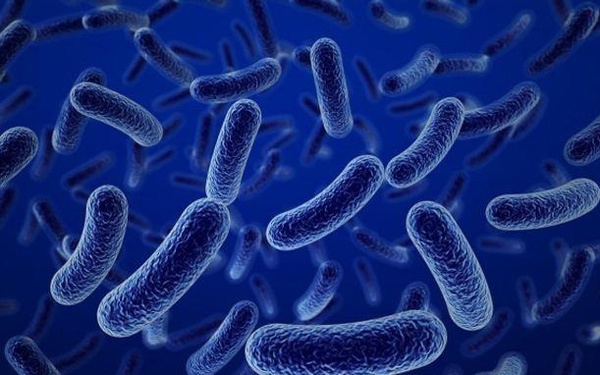 Bào tử lợi khuẩn Dr. ANH - hướng mới bảo vệ sức khỏe đường tiêu hóa