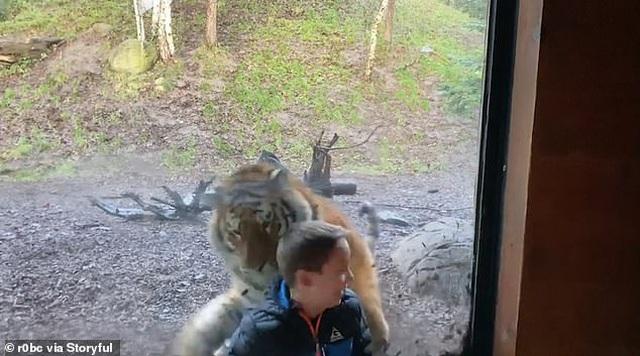 Đứng tim trước cảnh bé trai bị hổ vồ qua cửa kính