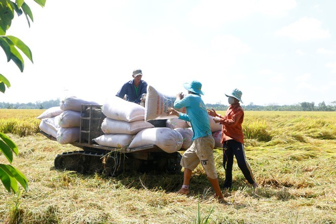 Lack of capital, human resources, land impedes rice production