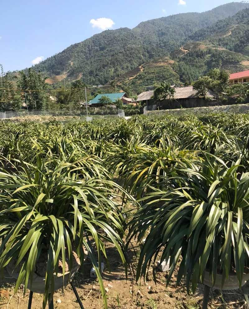 Ôm 'giấc mộng vua Trần', anh nông dân thu 7 tỷ mùa Tết