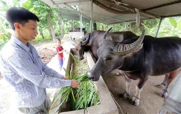 Vietnam seeks to develop modern livestock industry