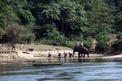 WWF helps Vietnam combat wildlife trafficking