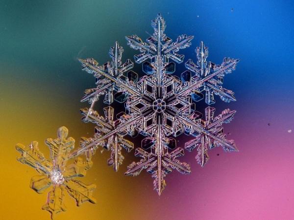 Vẻ đẹp mong manh của những bông tuyết trắng