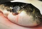 Ăn cá nóc, 6 người dân bị ngộ độc phải cấp cứu
