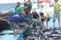 Thủy sản Việt Nam trụ hạng 'thẻ vàng' EU, 8 tỉnh vẫn còn vi phạm