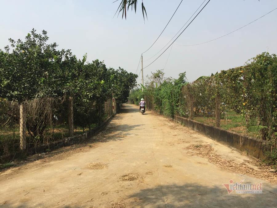 Thăm làng bưởi Tân Triều dịp cuối năm