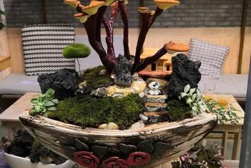 Giá đắt đỏ tiền triệu, nấm linh chi bonsai vẫn hút khách