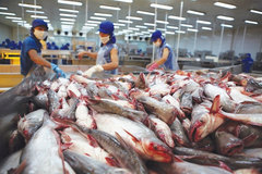 Catfish exports fall, VN farmers and exporters suffer
