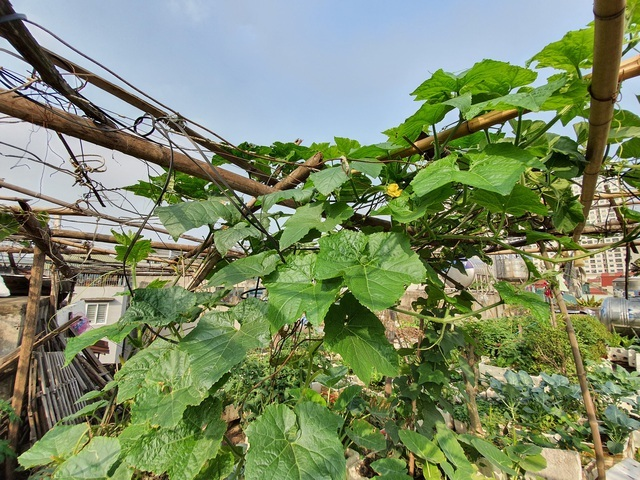 Độc đáo 'nông trại' trồng rau, nuôi gà trên sân thượng, giữa lưng trời ở Hà Nội