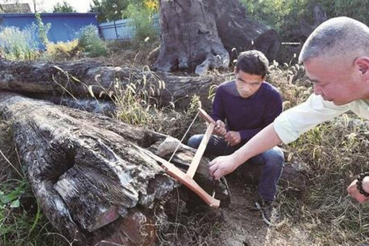 Nhặt khúc gỗ xấu xí vứt ngoài vườn, 5 năm sau mới biết là kho báu hơn 60 tỷ