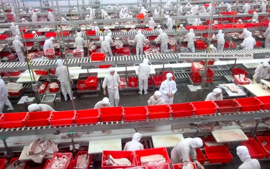công nhân,thiệt mạng,máy xay thịt,Malaysia