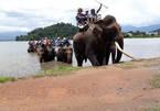 Dak Lak elephants need better protection
