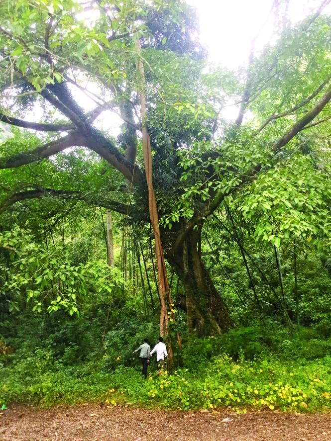 Kỳ lạ rừng gỗ nghiến hàng trăm năm, được dân ra sức bảo vệ