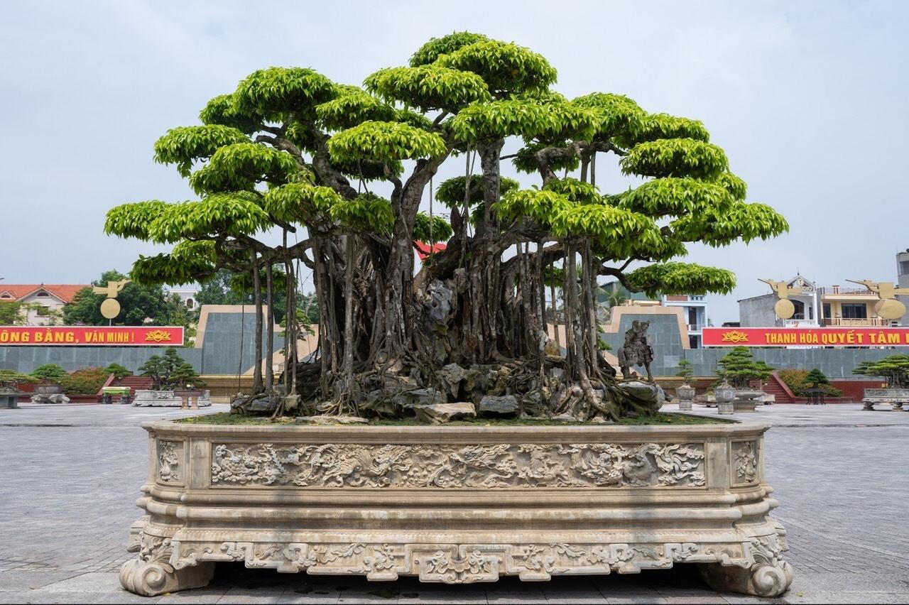 Hai cây quý khiến giới sinh vật cảnh xôn xao