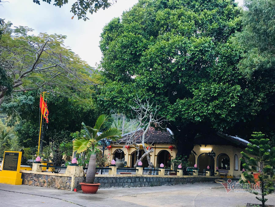 Huyền thoại về ba cây thị hơn 200 năm tuổi ở Côn Đảo